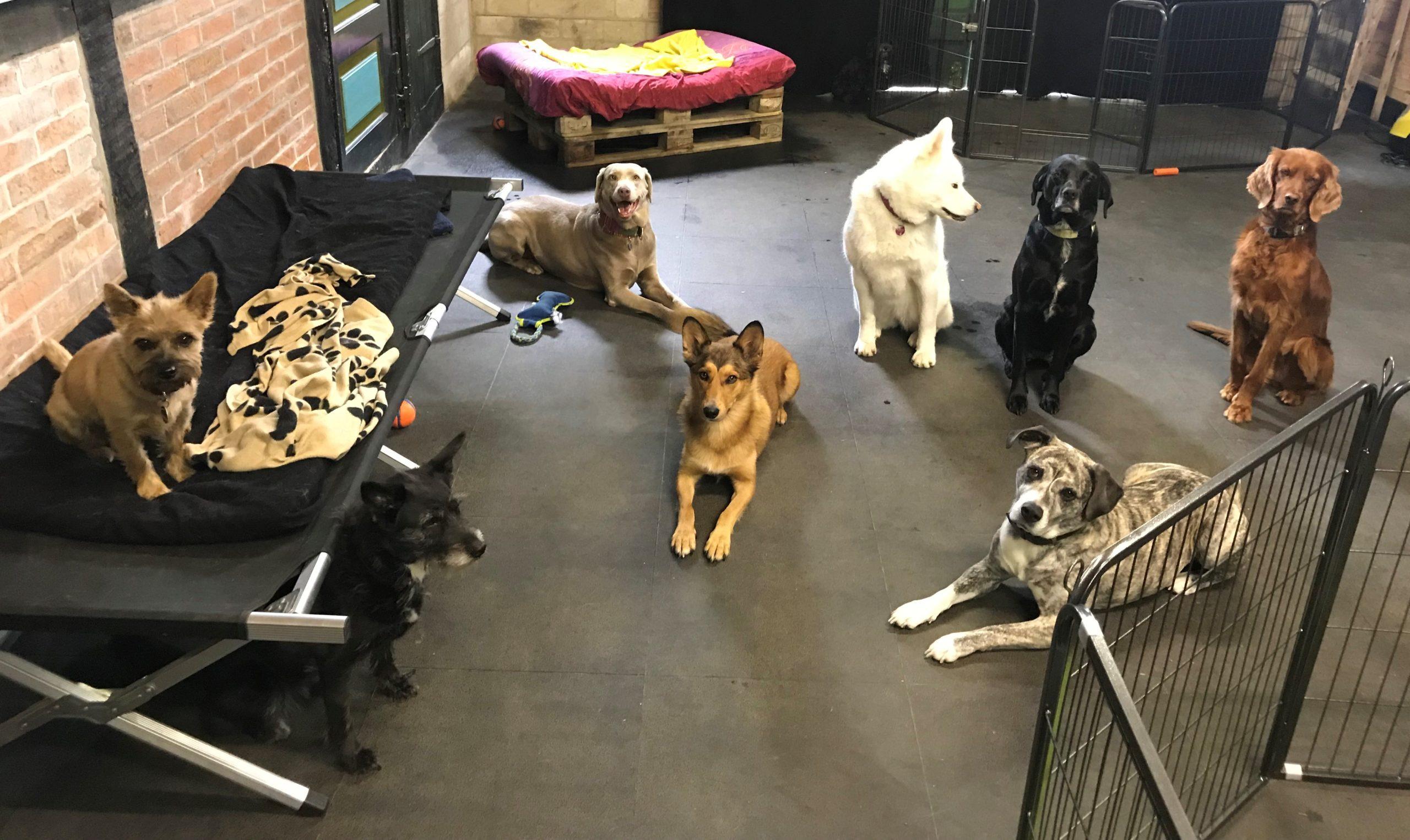 Indoor Hundespielhalle